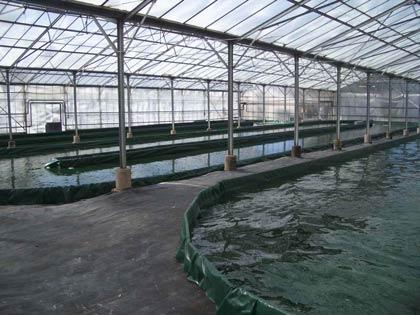 Les bassins de spiruline